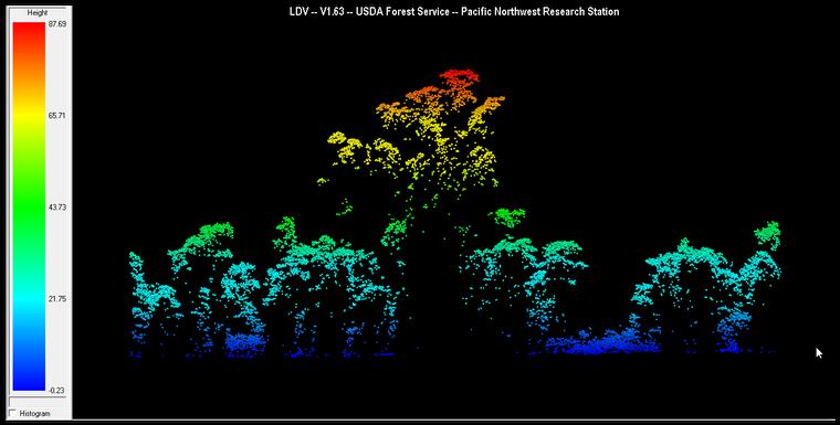 Árvore gigante identificada pelo sensor remoto aeroembarcado