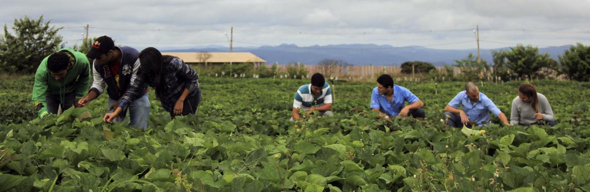 Foto ilustrativa do curso de Agronomia da UFVJM