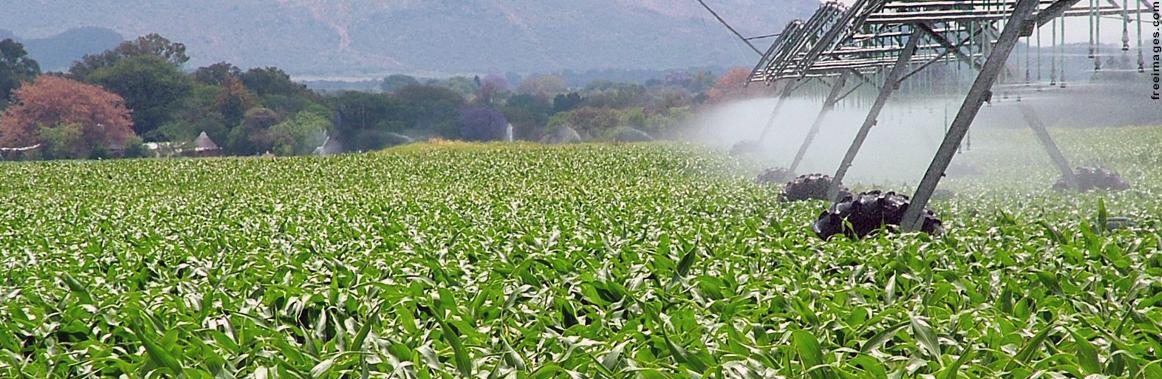 Foto ilustrativa do curso de Agronomia em Unaí da UFVJM